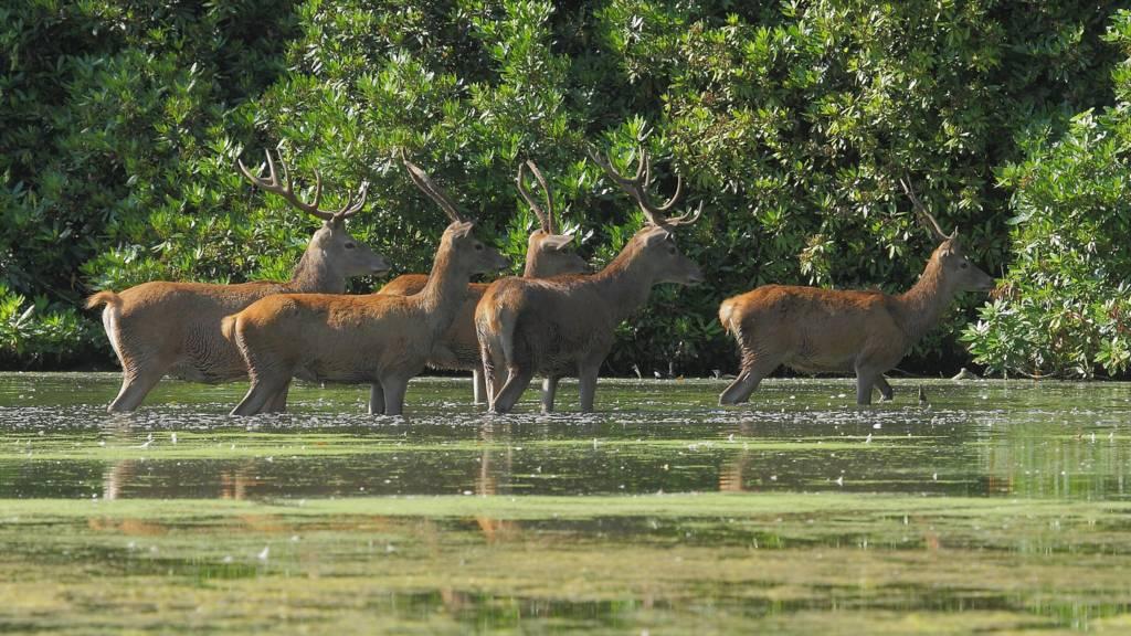 Deers at Wollaton