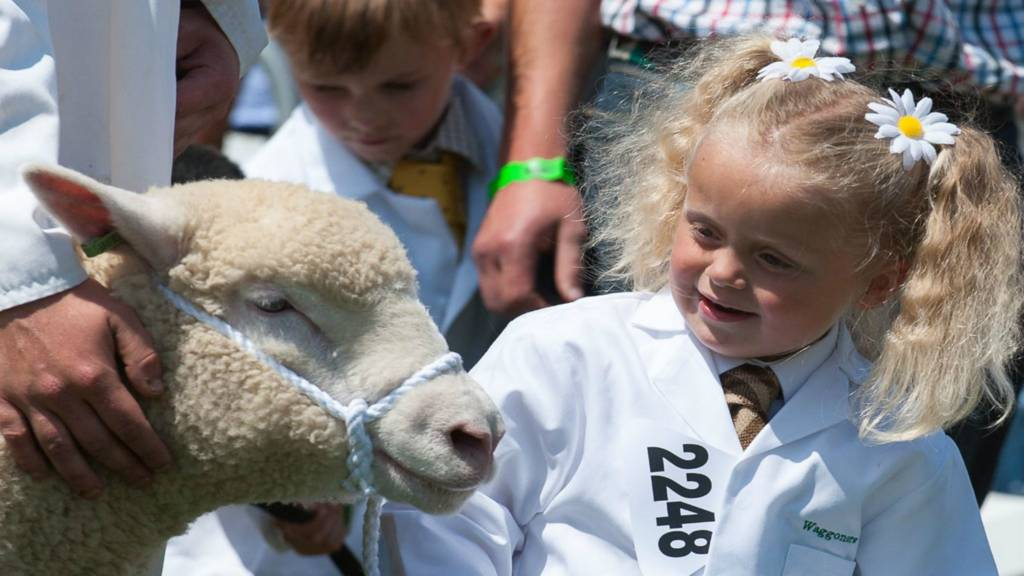 Sheep and young handler