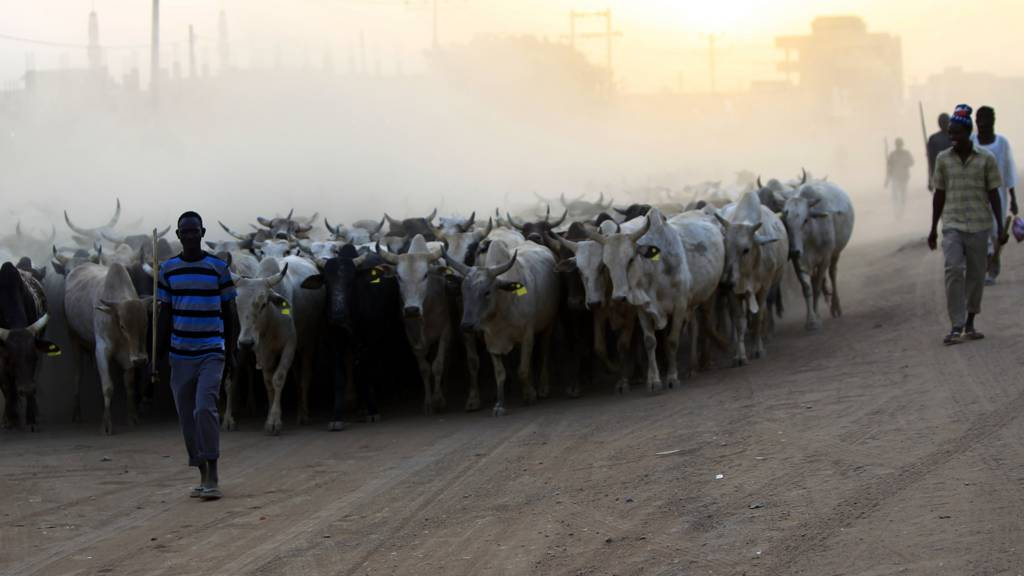 cow herders in Sudan