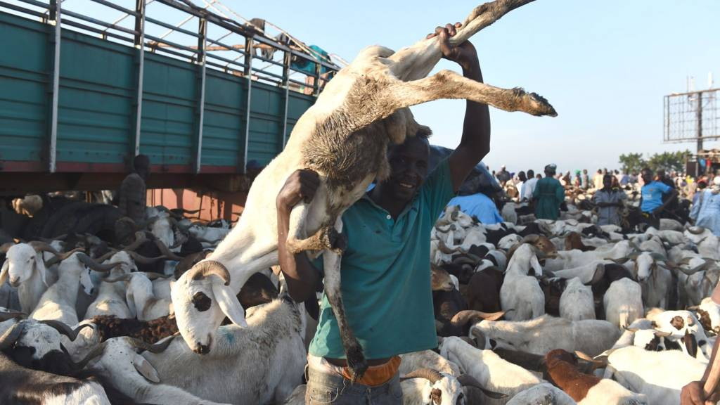 A vendor carries a ram discharged from a truck ahead of Eid-el-Kabir celebration at Kara Isheri market in Ogun State