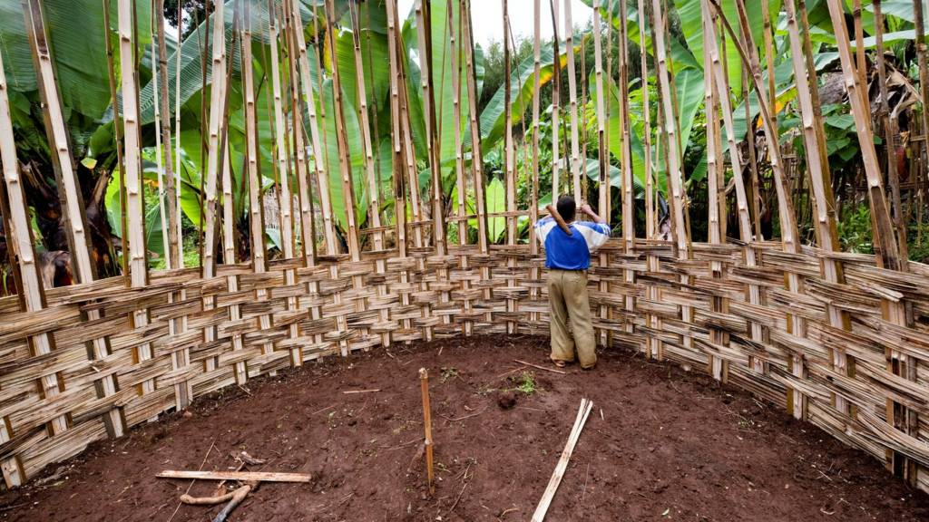 Building of a Dorze hut. which are made entirely from natural resources like bamboo and banana leaves.
