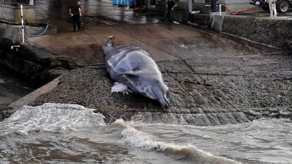 شکار نهنگ