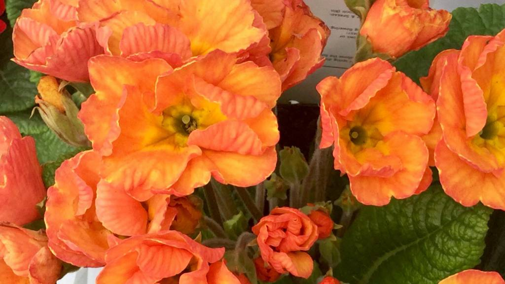 Flowers in Kegworth