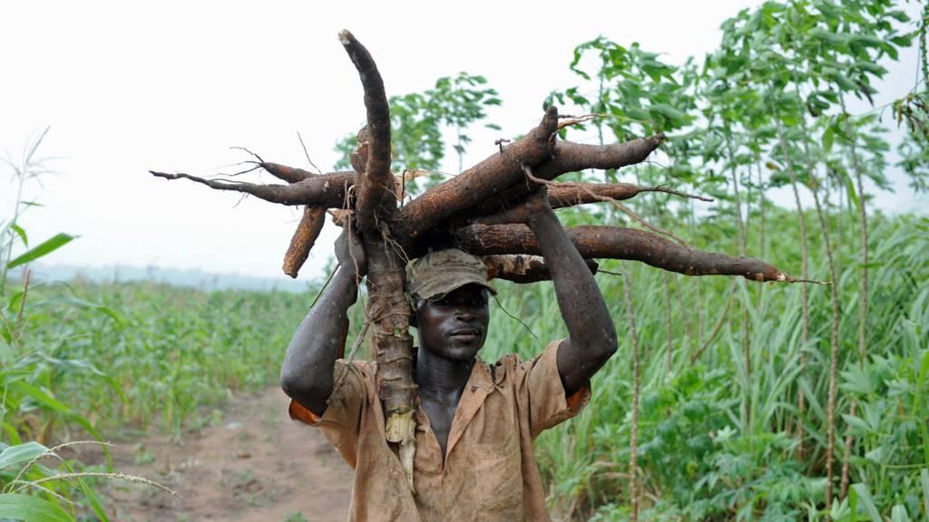 A cassava farmer in Nigeria