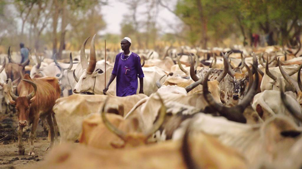 A man with cattle in South Sudan