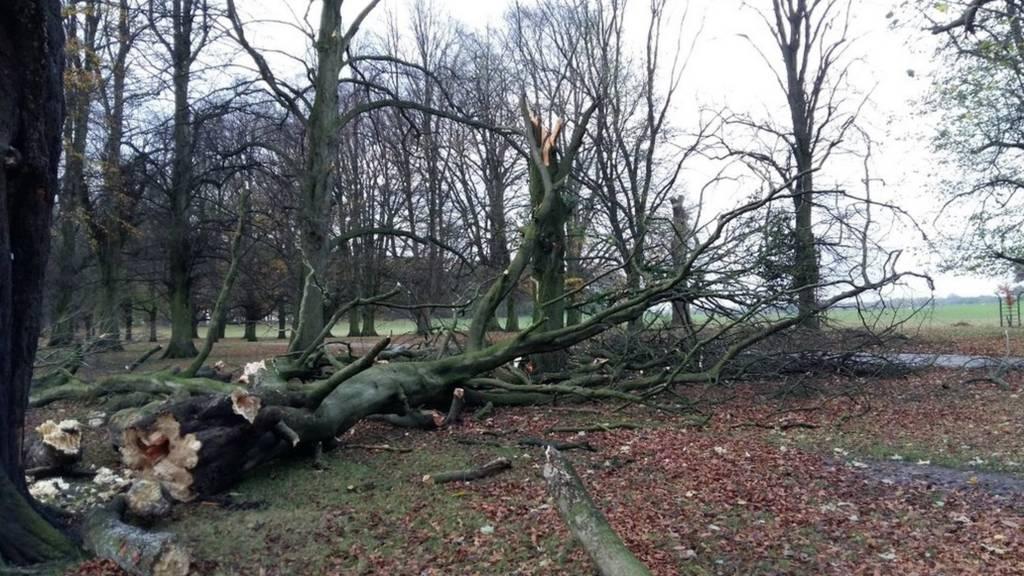 Storm damage at Tatton