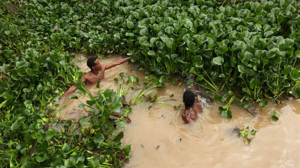 Ethiopian men remove hyacinth weed from Lake Tana