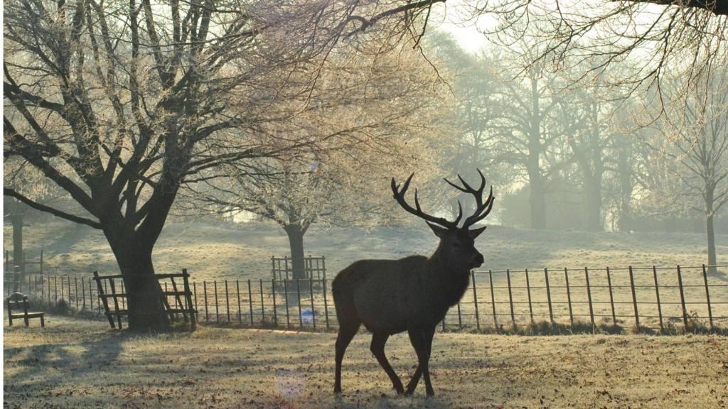 Deer at Wollaton Hall