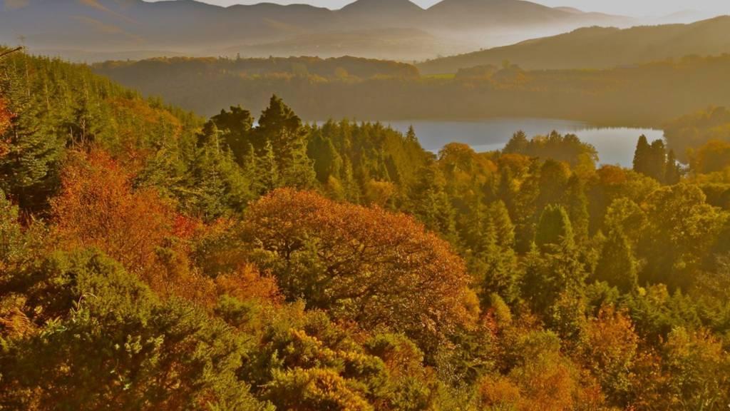 Castlewellan Forest
