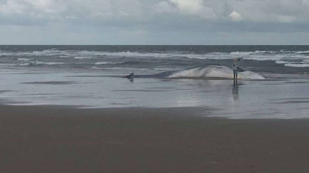 Beached whale at Holkham beach