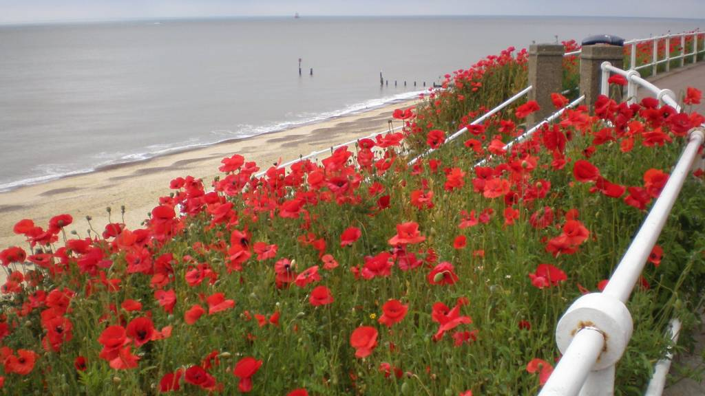 Poppies at Southwold
