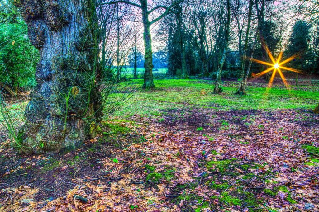 Sun through trees at Wortley