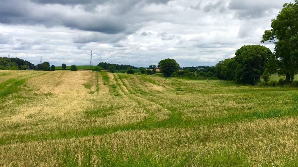 Hillsborough fields