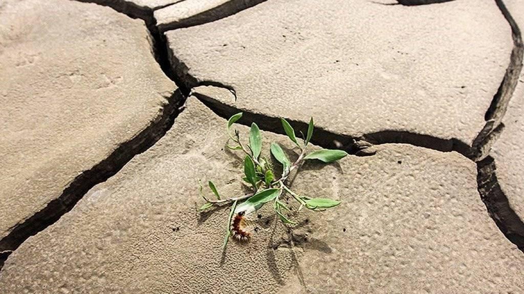 بحران آب در گلستان