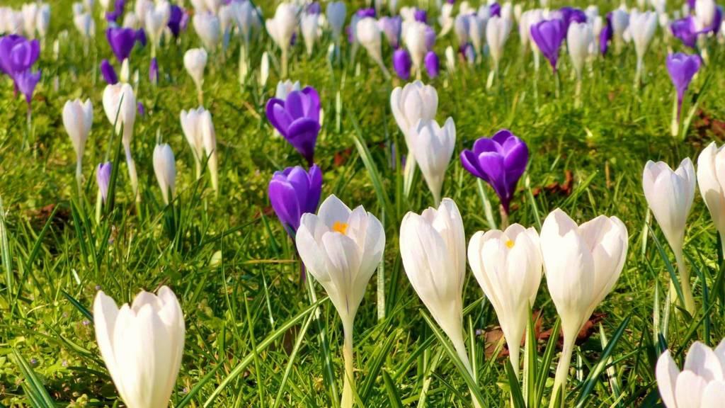 Flowers in Wigston Magna