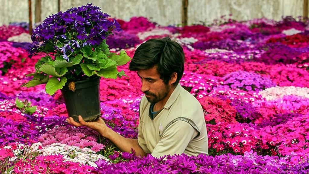 باغ گل پاکدشت