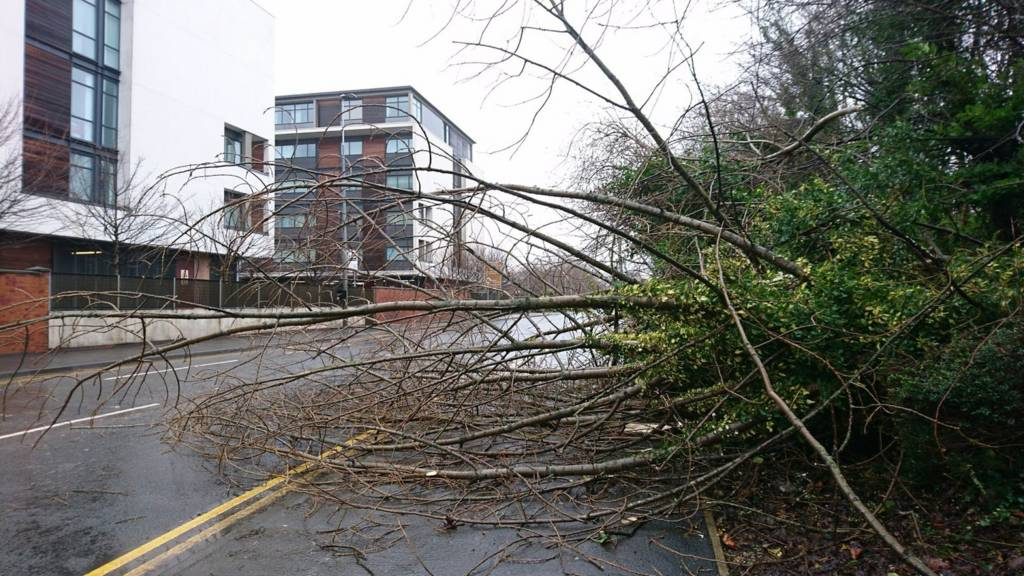 Fallen tree salford