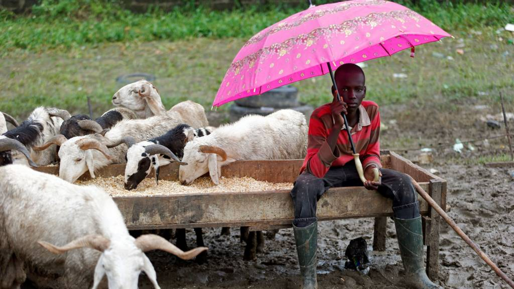 A boy sheltering from the rain selling livestock in Lagos, Nigeria