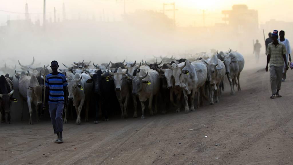 Herding animals