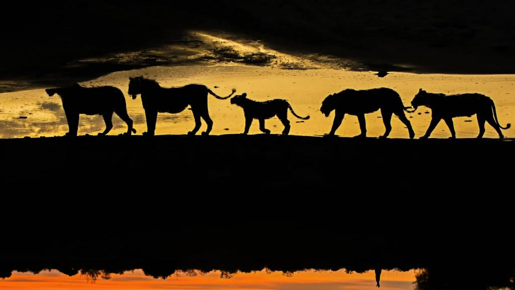 A silhouette of wild animals