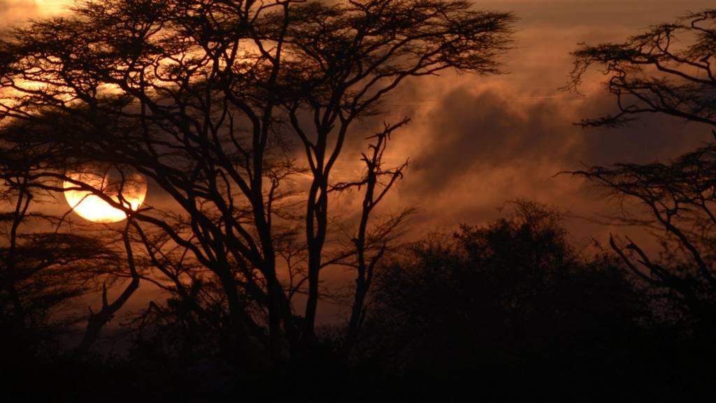 Sunrise at Nairobi national park, Kenya.