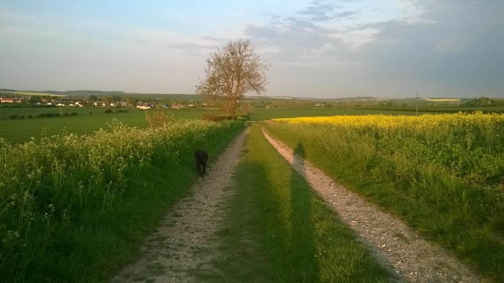 Field at dusk near Cambridge