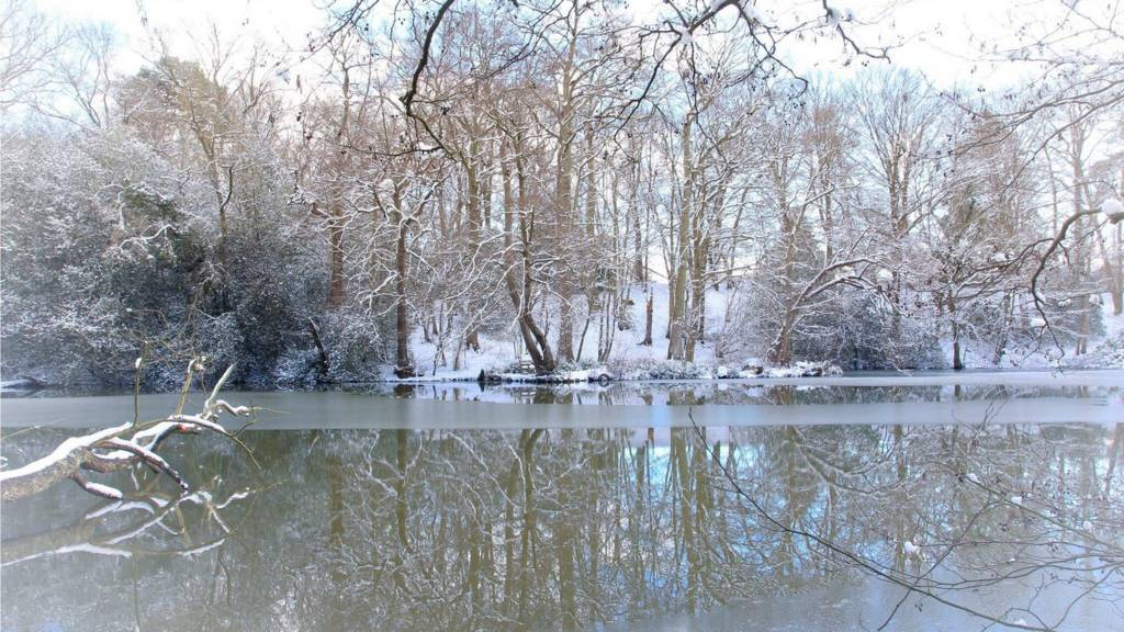 Icy lake and snowy trees