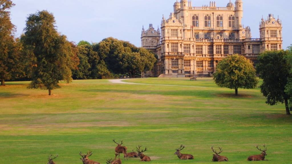 Wollaton Hall deer