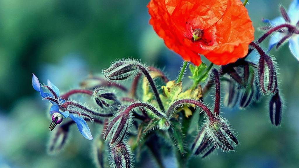 Wild flower in Bedfordshire