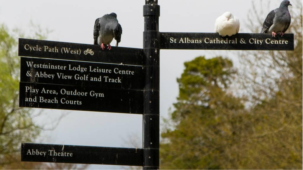 St Albans signpost
