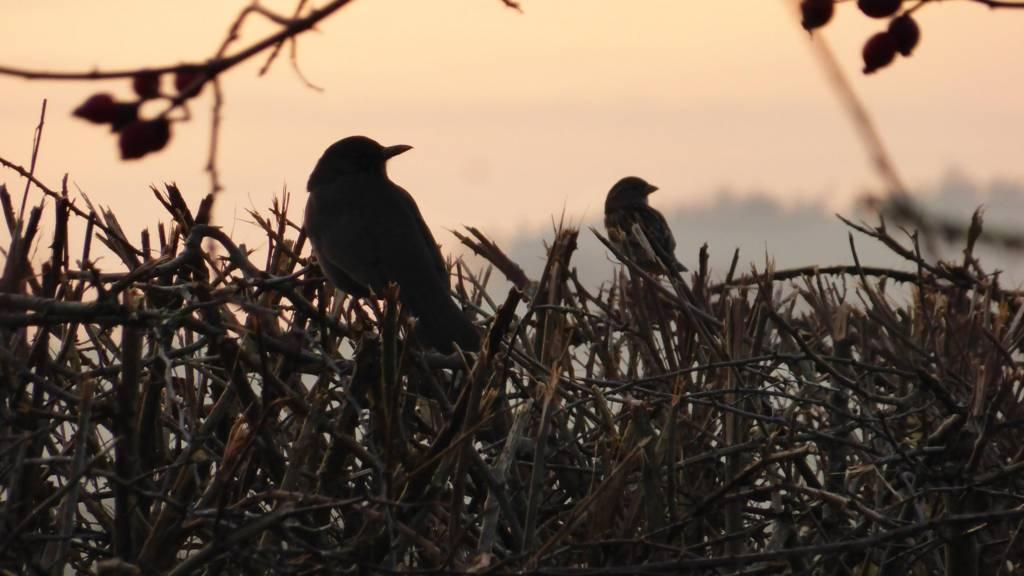 Birds watching the sunset in Market Harborough