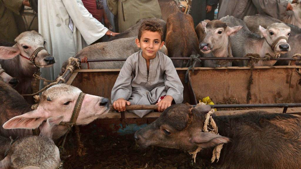 A child at a cattle market in Egypt - 15 August 2018