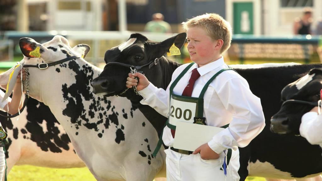 Young dairy handler