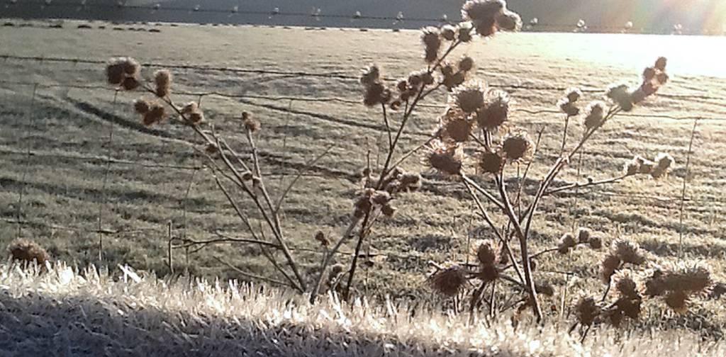 Raveningham frost