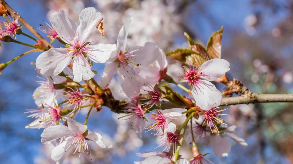 Flowers in Queens Park, Loughborough