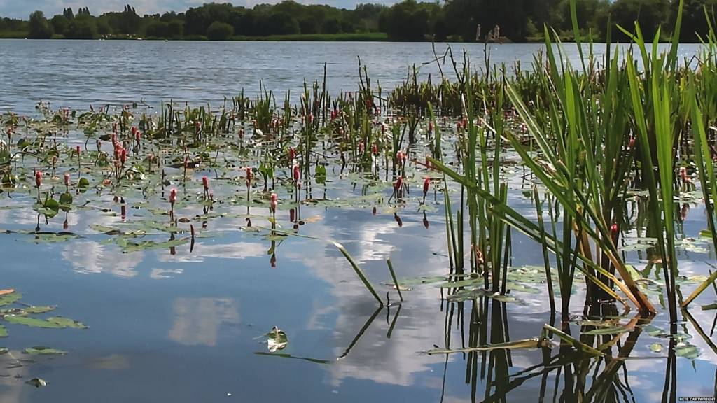 King Lears Lake, Watermead Country Park