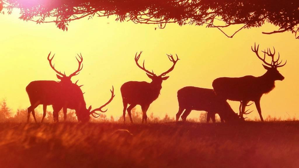 Deers at Chatsworth