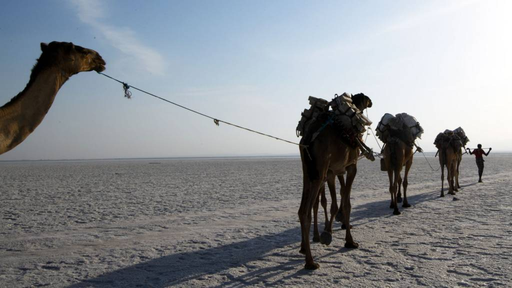 A camel caravan carrying salt mined by hand is led across a salt plain in the Danakil Depression on 22 January 2017 near Dallol, Ethiopia