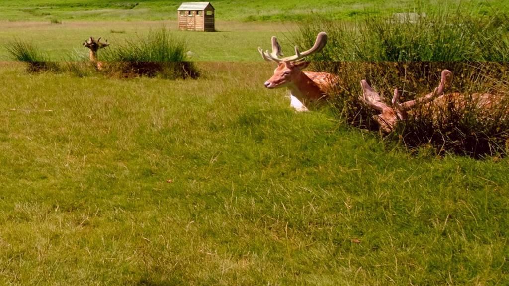 Deer in Leicester