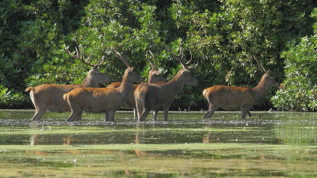 Deer at Wollaton
