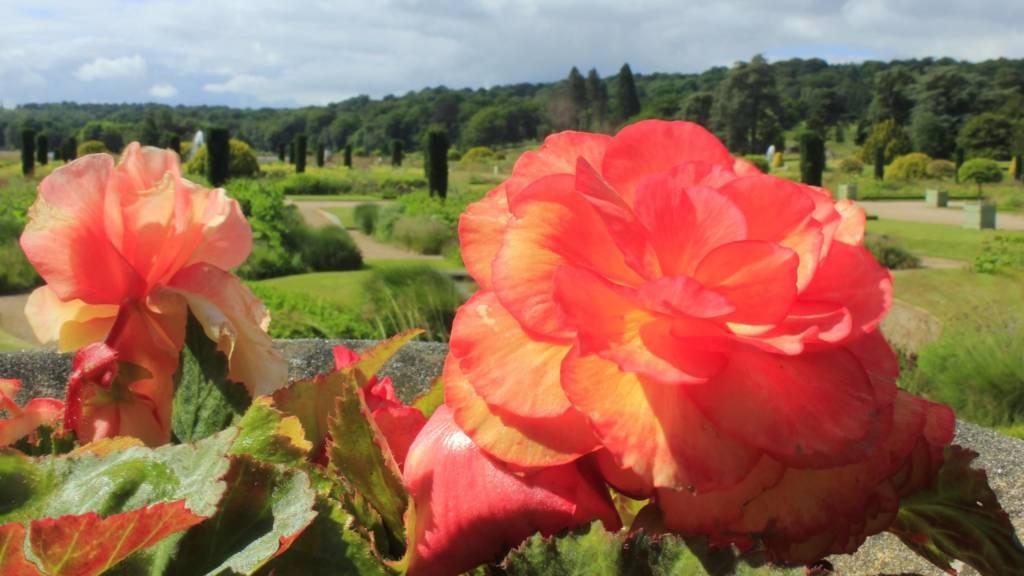 Roses at Trentham