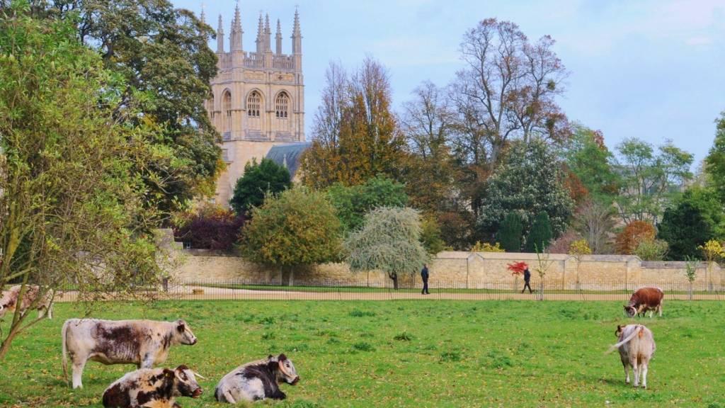 Christ Church Meadow