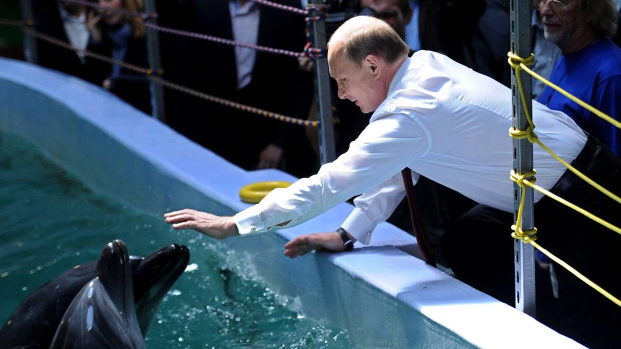 Putin stokes a dolphin