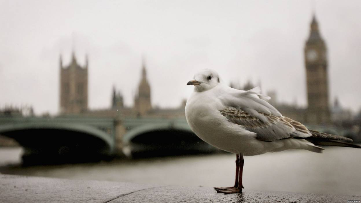 seagull by Big Ben