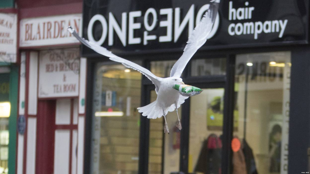 Seagull flying away from shop with crisps