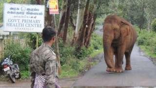 गणेशन हत्ती
