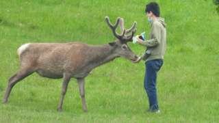 Man feeding a deer