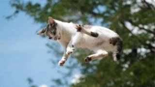 Gato durante queda