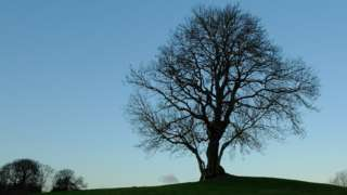 Ash tree silohuette, Cumbria (Image courtesy of National Trust Images and Peter Tasker)