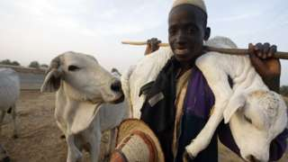 Anti-open grazing law: Miyetti Allah stand on Lagos new law for cattle farmers